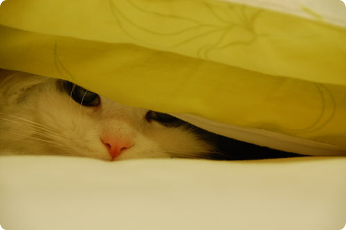 Hiding under the duvet